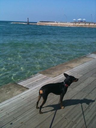my dog at the Tel Aviv port